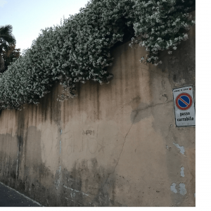 walls in Lucca